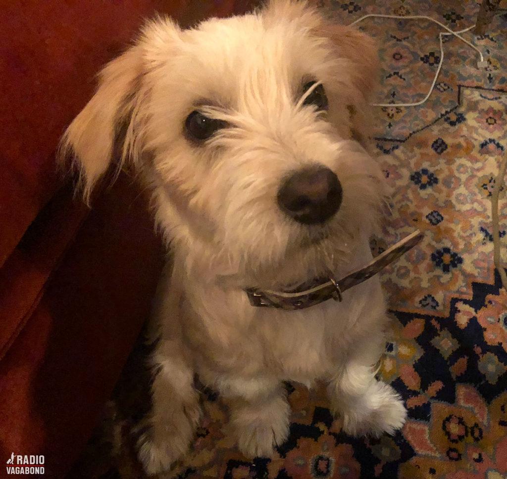 Erdis' lille hund afbryder interviewet.