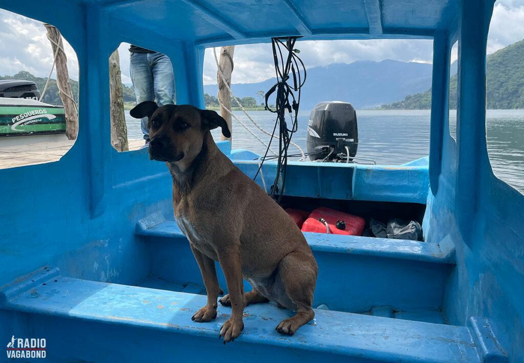 Hunden Cattzij er klar på at sejle.