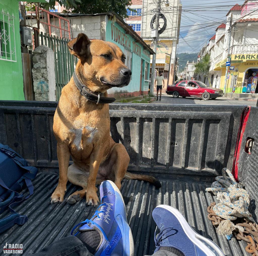 To mænd og en hund på ladet af en pickup.